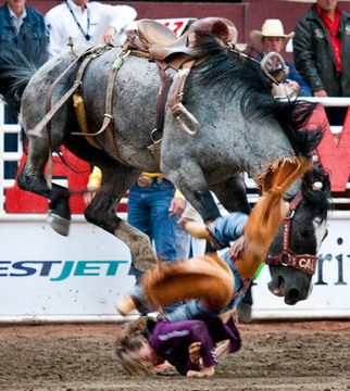 Violence Against Animals Continues Unabated At The Calgary