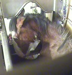 Clydesdale shies away from killer at LPN