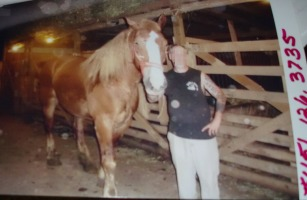 Horse 33 at auction