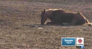 Horse near Orangeville Nov 2012