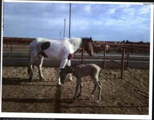 Mare and foal at feedlot
