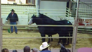 Sold to kill buyer - Oct 2012 - Drayton Valley, Alberta - photo Tierschutzbund