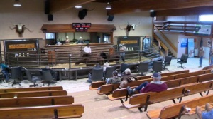 AB SPCA auction horses
