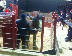 This blind Clyde mare was run through OLEX in Feb 2012.  It's believed she shipped to slaughter.
