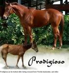 progidioso