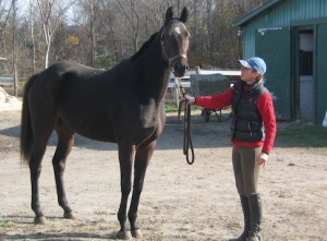 Mindy Lovell, pictured with OTTB Angel, has started a fundraising campaign to keep her 43 rescue horses fed this winter. Horses pictured in these photos have found new homes.All but Lady Limbo,pictured last, were slaughter bound when she rescued them.