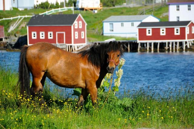 change islands pony sanctuary