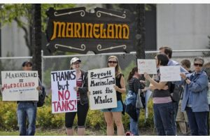 TARA WALTON / TORONTO STAR FILE PHOTO Until Star reporters Linda Diebel and Liam Casey raised questions about Marineland, the OSPCA had shied away from investigating it and other zoos, writes Thomas Walkom.