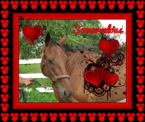 Following the successful hay/grain fundraiser in December, Mindy Lovell of Transitions Thoroughbreds in Ontario readies for a Valentine's Day fundraiser