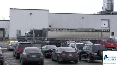 2014_1_15_Richelieu Plant_Quebec (5)