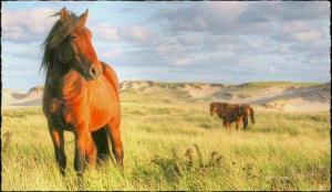 sable-island-horses-tonemapped1