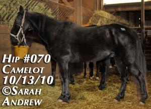 Sampson - former Big Licker horse