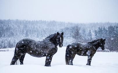 twosnowhorses_406x250