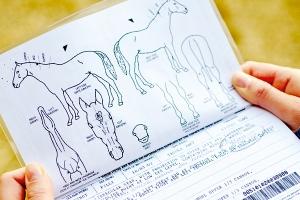 Equine Passports