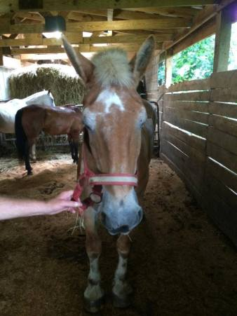 Skipper died at NH before he could be rescued from tetanus