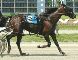 Standardbred racer