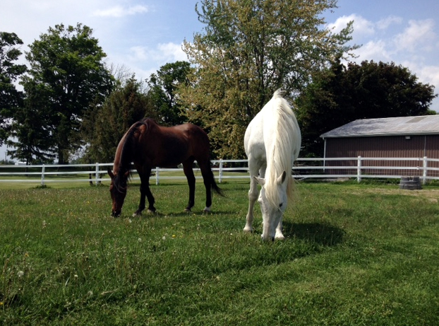 Johnny and Candy - Marie's horses