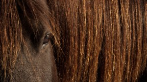 European-Commission-urged-to-ban-Canadian-horsemeat_strict_xxl