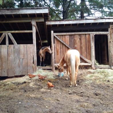 auction horses3