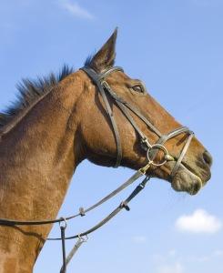 dreamstime_horse_snafflenocontrail
