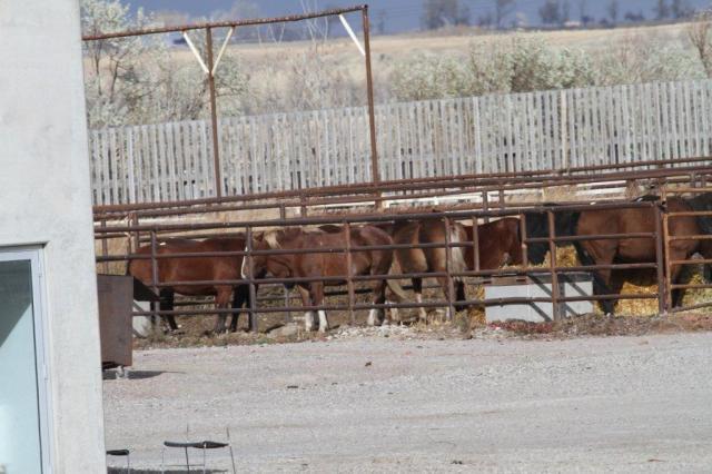 20.10.2012_CH.SG.03_Pferde beim Schlachthof Bouvry (1)