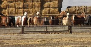 horseslookingatcamera