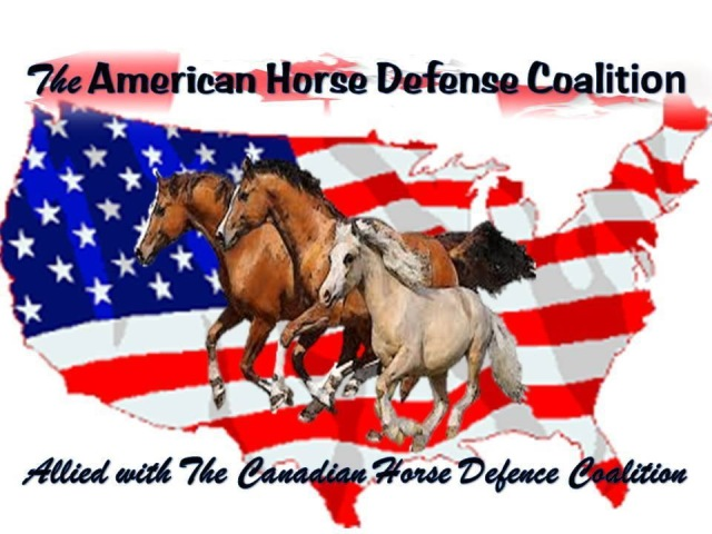 What is required to transport a horse into canada to its new owner.?