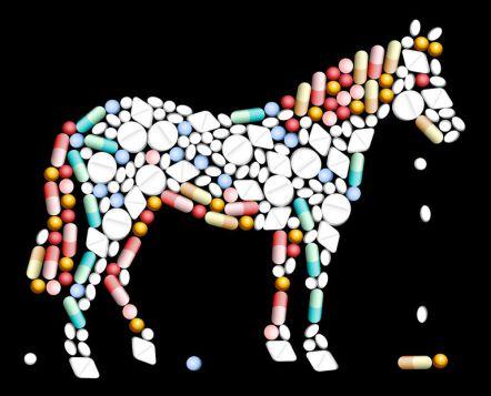 bute-horse