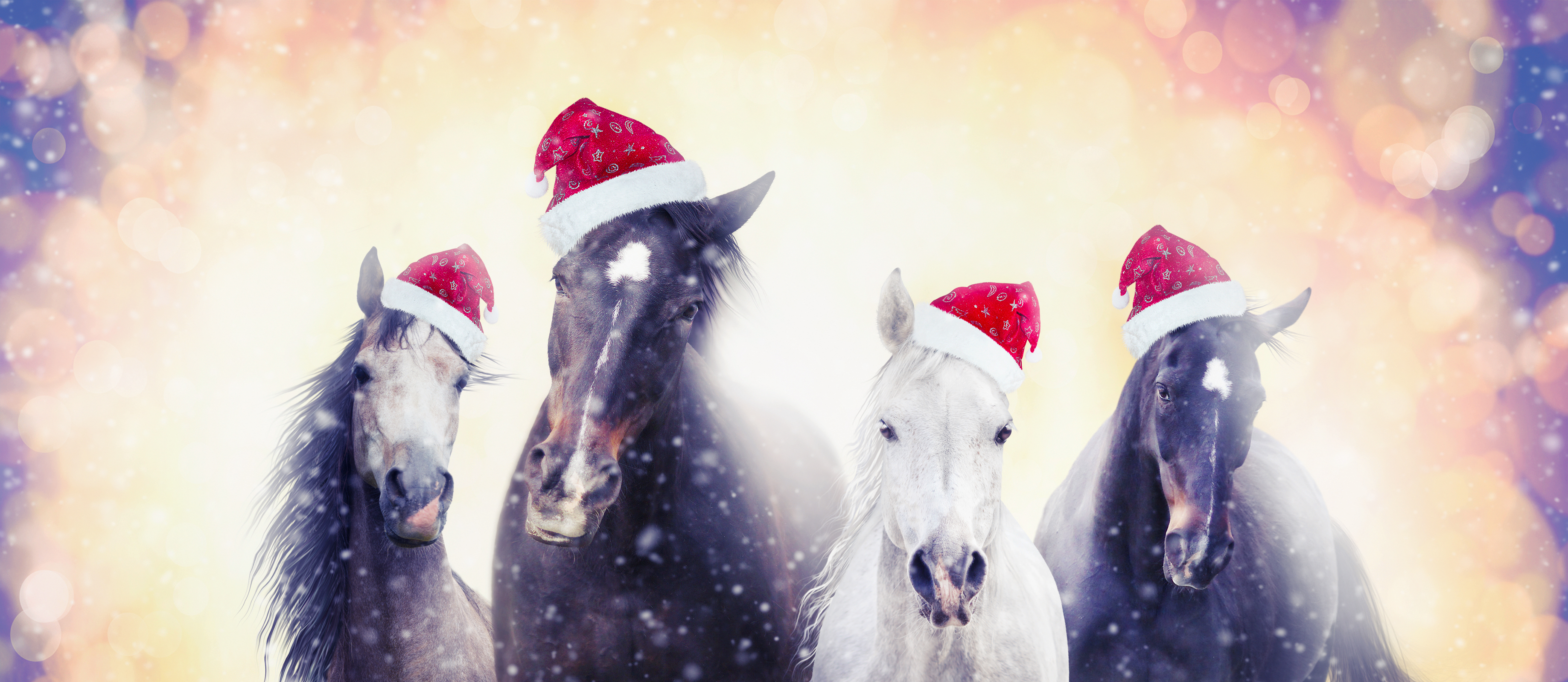 Christmas horses with Santa hat on snow bokeh background, banner for website
